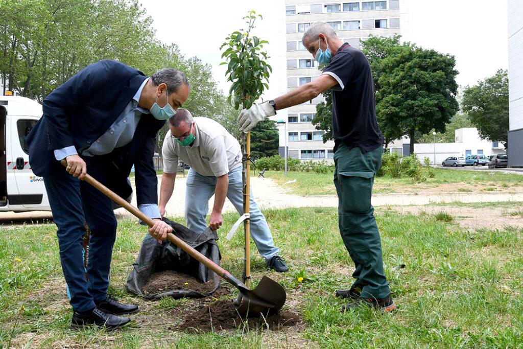 don d'arbre plantation