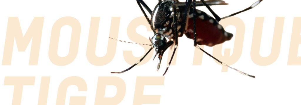 slide moustique copie